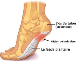 Schéma du pied